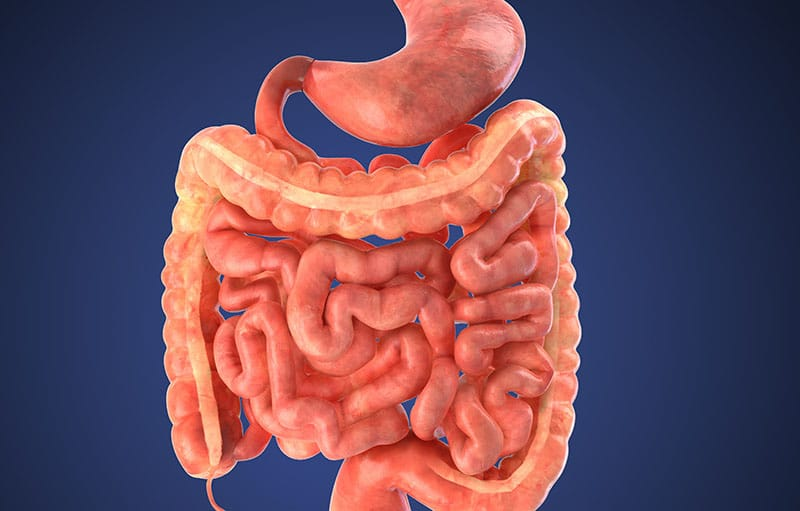 Gut Health Matters for NETs Patients – Nurses Share Why